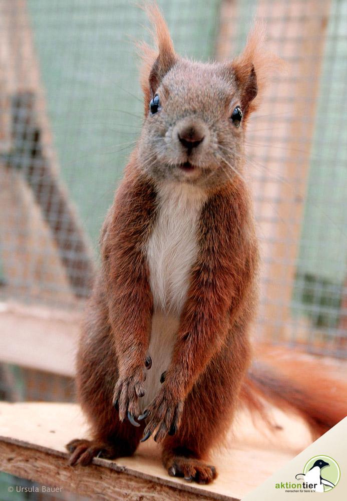 Großzügig Eichhörnchen Auf Draht Fotos - Elektrische Schaltplan ...